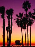 Palm Trees at Sunset, Venice Beach, Los Angeles, Los Angeles, California, USA Fotoprint van Richard Cummins