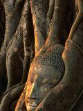 Buddha Head Inbedded in Roots at Wat Phra Mahathat, Ayuthaya, Thailand Lámina fotográfica por Anders Blomqvist