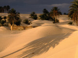 Palm Trees and Sand Dunes, Douz, Tunisia Fotografie-Druck von Wayne Walton