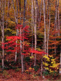 Wonderful Autumn Colours of Green Mountains in Vermont, Vermont, USA Photographic Print by Wes Walker