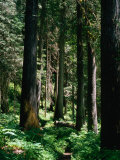 Forest, USA Fotografisk trykk av Kraig Lieb