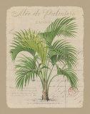 Alee de Palmiers Affiches par Hugo Wild