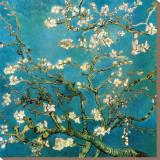 Almond Branches in Bloom, 1890 Impressão em tela esticada por Vincent van Gogh