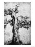 Study of a Tree, Royal Library, Turin Reproduction procédé giclée par Jan Wijnants