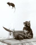 Kat en muis Schilderij