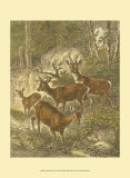 Small Roe Deer Posters by Friedrich Specht
