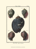Sea Shells VII Posters par Denis Diderot