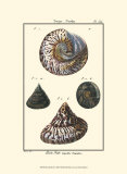 Sea Shells II Affiches par Denis Diderot
