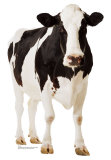 Holstein Kuh Pappfiguren