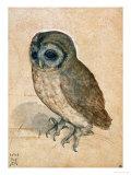 Sreech-Owl, 1508 Impressão giclée por Albrecht Dürer