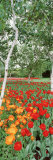 Spring Flowers, Lake Burley Griffin, Australia Photographic Print by  Panoramic Images