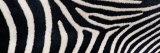 Greveys Zebra Stripes Fotografisk trykk av Panoramic Images,