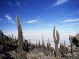 Cacti on Inkawasi Island, Salar De Uyuni, Uyuni Salt Flats, Bolivia, South America Photographic Print by Rhonda Klevansky