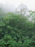 Tropical Rainforest Canopy in Mist, Braulio Carrillo National Park, Costa Rica Fotografie-Druck von Juan Manuel Borrero