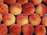 Peaches (Prunus Persica) Europe Photographic Print by  Reinhard