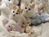 Domestic Cat, Two Turkish Van Kittens with Soft Toys in Crib Reproduction photographique par Jane Burton