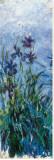 Iris Mauve (detail) Impressão em tela esticada por Claude Monet