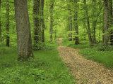 Forest of Chambord, Loir Et Cher, Loire Centre, France Reproduction photographique par Michael Busselle