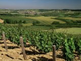 Vineyards Near Irancy, Burgundy, France Reproduction photographique par Michael Busselle