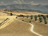 Landscape Near Jaen, Andalucia, Spain Reproduction photographique par Michael Busselle