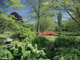 Japanese Bridge, Heale House Gardens, Middle Woodford, Wiltshire, England, United Kingdom Photographic Print by Chris Nicholson