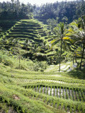 Terraced Rice Fields, Bali, Indonesia, Southeast Asia Photographic Print by Robert Harding