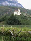 Church and Vines at Missiano, Caldero Wine District, Bolzano, Alto Adige, Italy Photographic Print by Michael Newton