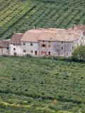 Vineyards Near Fumane in the Centre of the Valpolicella Classico Zone, Fumane, Veneto, Italy Photographic Print by Michael Newton