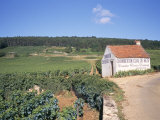 Vineyards on Route Des Grands Crus, Nuits St. Georges, Dijon, Burgundy, France Photographic Print by Geoff Renner