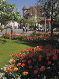 Flower Beds with Tulips in Town Centre, Deauville, Calvados, Normandy, France Photographic Print by David Hughes