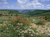 Causse Mejean, Gorges Du Tarn Behind, Lozere, Languedoc-Roussillon, France Fotografisk trykk av David Hughes