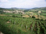 Maconnais Vineyards, Poilly Fuisse, Near Macon, Saone-Et-Loire, Burgundy, France Lámina fotográfica por David Hughes