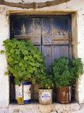 Windowsill, Paleohora, Crete, Greece Fotografisk trykk av Peter Ryan