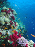 Huge Biodiversity in Living Coral Reef, Red Sea, Egypt Fotografisk tryk af Lousie Murray