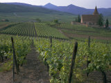Vineyards, Hunawihr, Alsace, France Photographic Print by Guy Thouvenin