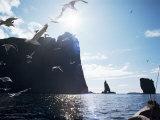 Faroe Islands, Denmark, North Atlantic Photographic Print by Adam Woolfitt