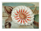 Victoria Regia or the Great Water Lily of America (Complete Bloom), 1854 Giclee Print by Mary Cassatt