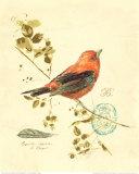 Gilded Songbird III Prints by Chad Barrett