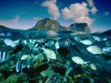 Damselfish and Sunset Wrasses Swim Above a Reef Fotografie-Druck von David Doubilet