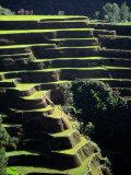 Rice Terraces, Ifugao Province, Luzon, Southern Tagalog, Philippines Fotografisk tryk af John Elk III