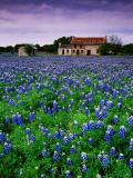 Field of Blubonnets, Marble Hill Area, Texas Lámina fotográfica por Cummins, Richard