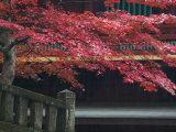 Red Autumn Tree at the Nikko-San Rinnoji Temple, Nikko, Kanto, Japan Reproduction photographique par Brent Winebrenner