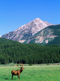 Elk and Mountains Near Coyote Valley, Rocky Mountain National Park, Colorado Fotografie-Druck von Holger Leue