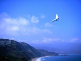 Hang Gliding at Fort Funston, San Francisco, California Fotografisk trykk av Ray Laskowitz