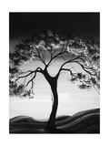 Schwarzer Baum Giclée-Premiumdruck von Megan Aroon Duncanson