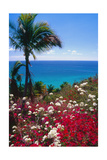 Palm and tropical Flowers Photographic Print by George Oze