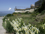Egret Flies over the lawns of Alcatraz, San Francisco, California Photographic Print by Eric Risberg