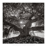 Under Camperdown Elm, Prospect Park Prints by Henri Silberman