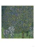 Rose Bushes Under Trees, c.1905 Giclée-Druck von Gustav Klimt