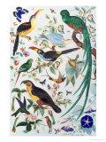 Exotic Parrots, c.1850 Giclée-tryk af John James Audubon
